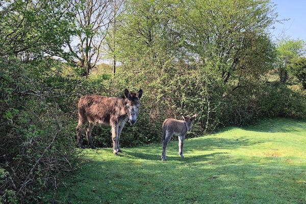 Foals on the Forest in May drive carefully