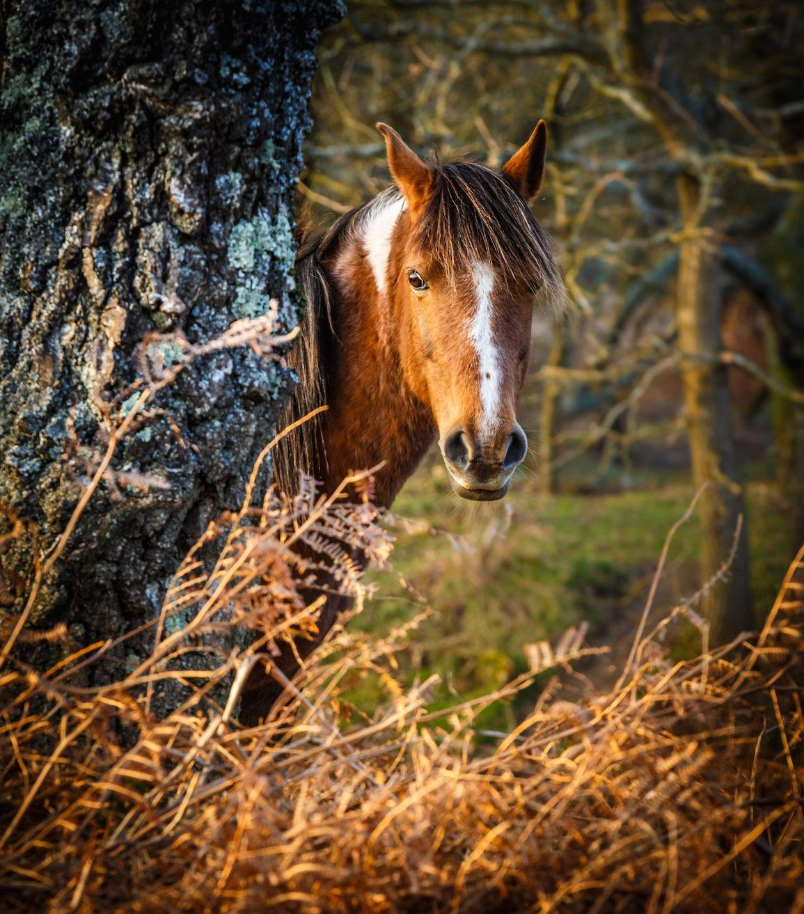 New Forest pony behind tree by Alex Kerslake