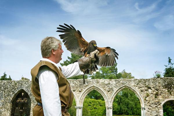 Beaulieu's first official falconer for 3 centuries, Paul Manning