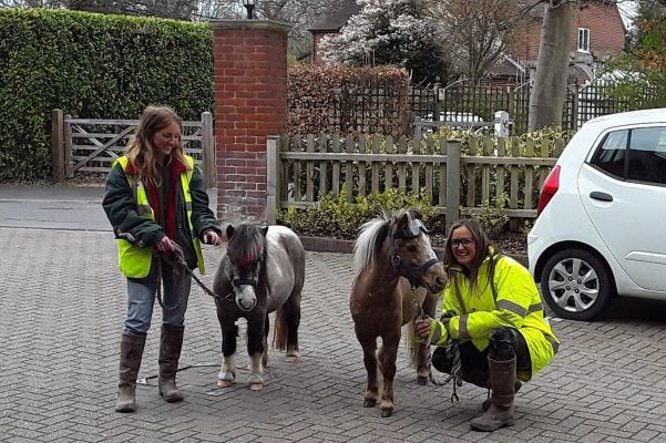 miniature ponies with people