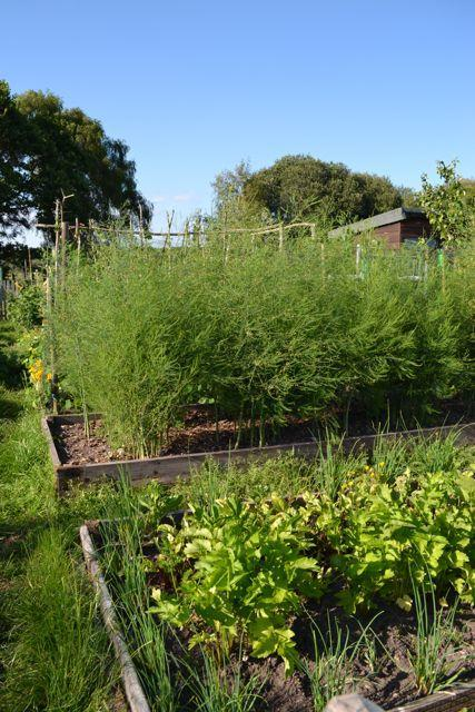 Vegetable growing with sunlight in your New Forest garden
