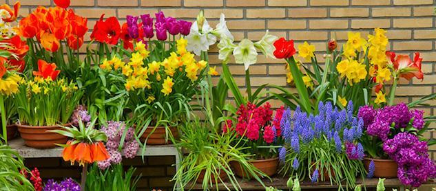 How to plant bulbs for a fantastic spring display