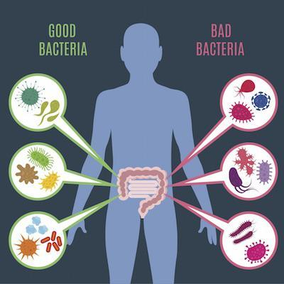 Good bacteria bad bacteria Converted web