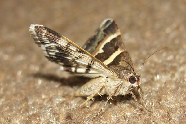 A moth free carpet for your New Forest property