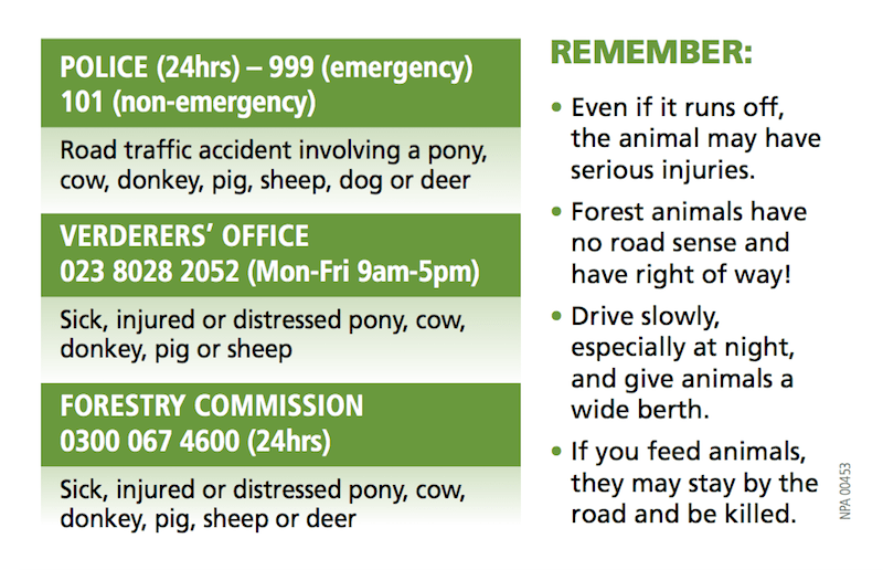 Who to contact if you see an injured or distressed New Forest animal
