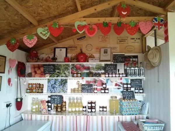 Goodall's pick your own farm: strawberries, raspberries, pumpkins