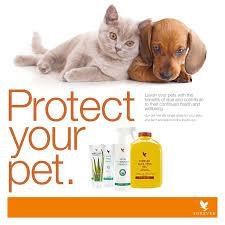 Protect your pet with aloe vera