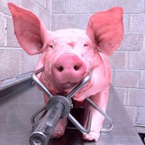 Hog and Lamb Spitroast Company